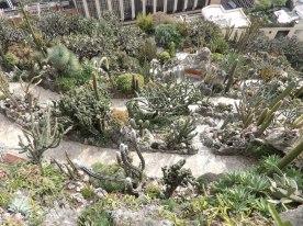 Cacti Everywhere