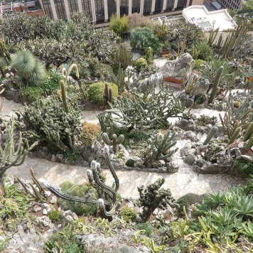 Cacti Everywhere